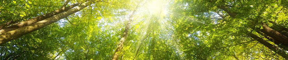 Wald Panorama mit Sonnenstrahlen – Banner